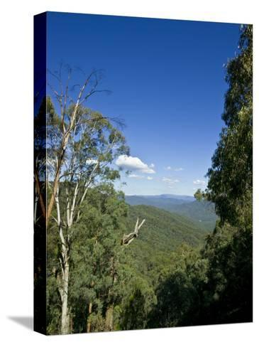 Mountains Covered in Dense Eucalyptus Forests Roll into the Distance-Jason Edwards-Stretched Canvas Print