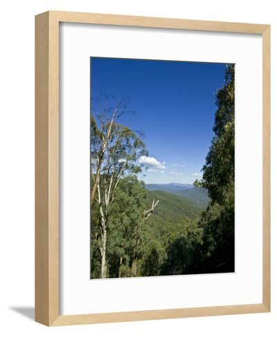 Mountains Covered in Dense Eucalyptus Forests Roll into the Distance-Jason Edwards-Framed Art Print