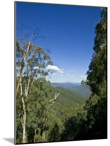 Mountains Covered in Dense Eucalyptus Forests Roll into the Distance-Jason Edwards-Mounted Photographic Print