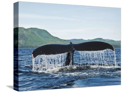 Humback Whale Diving with Tail Flukes Raised into the Air-James Forte-Stretched Canvas Print
