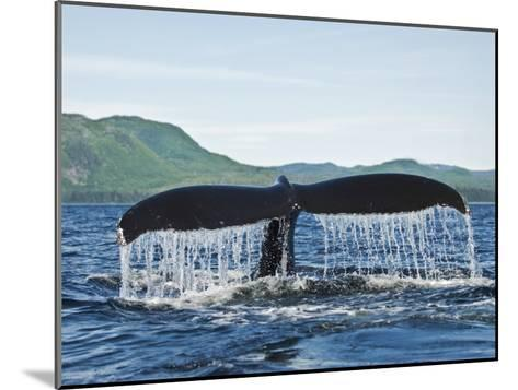 Humback Whale Diving with Tail Flukes Raised into the Air-James Forte-Mounted Photographic Print