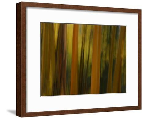 Close Up and Soft Focus of Aspen Trees in the Fall-Raul Touzon-Framed Art Print