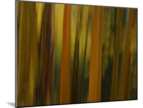Close Up and Soft Focus of Aspen Trees in the Fall-Raul Touzon-Mounted Photographic Print