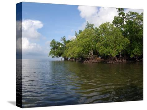 Mangroves a the Edge of a Small Island in the Celebes Sea-Darlyne A^ Murawski-Stretched Canvas Print