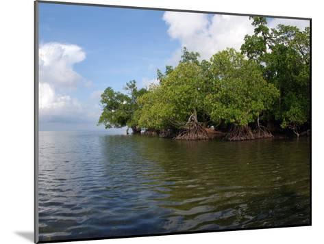 Mangroves a the Edge of a Small Island in the Celebes Sea-Darlyne A^ Murawski-Mounted Photographic Print