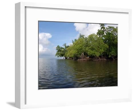 Mangroves a the Edge of a Small Island in the Celebes Sea-Darlyne A^ Murawski-Framed Art Print