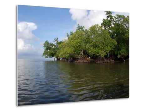 Mangroves a the Edge of a Small Island in the Celebes Sea-Darlyne A^ Murawski-Metal Print