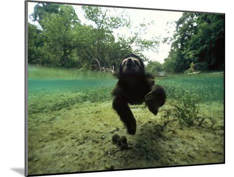 Pygmy Sloth Swimming in Coastal Panama Waters-Bill Hatcher-Mounted Photographic Print