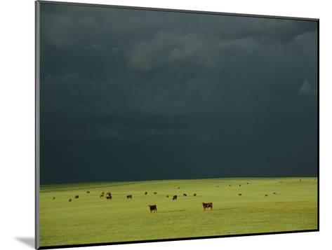 Ominous Storm Clouds Gather over a Field of Grazing Cattle-Peter Carsten-Mounted Photographic Print