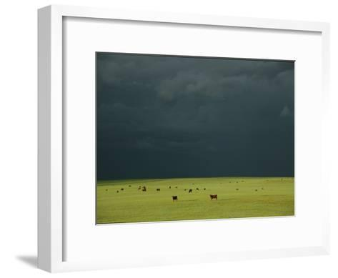 Ominous Storm Clouds Gather over a Field of Grazing Cattle-Peter Carsten-Framed Art Print