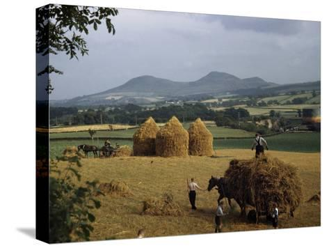 Men Harvest Oats Below Eildon Hills-B^ Anthony Stewart-Stretched Canvas Print