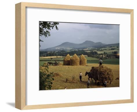 Men Harvest Oats Below Eildon Hills-B^ Anthony Stewart-Framed Art Print