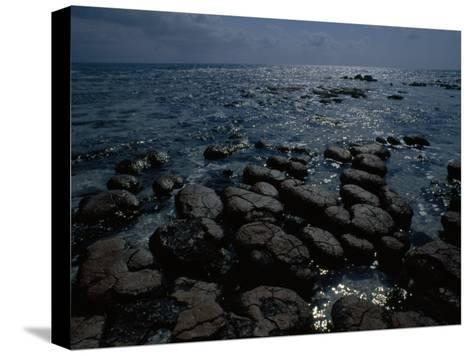Survivors of the First Living Communities, Stromatolite Reefs Still Flourish in Shark Bay-O^ Louis Mazzatenta-Stretched Canvas Print
