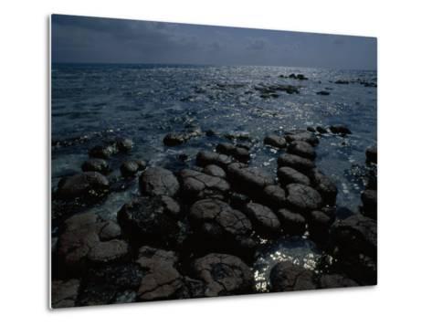 Survivors of the First Living Communities, Stromatolite Reefs Still Flourish in Shark Bay-O^ Louis Mazzatenta-Metal Print