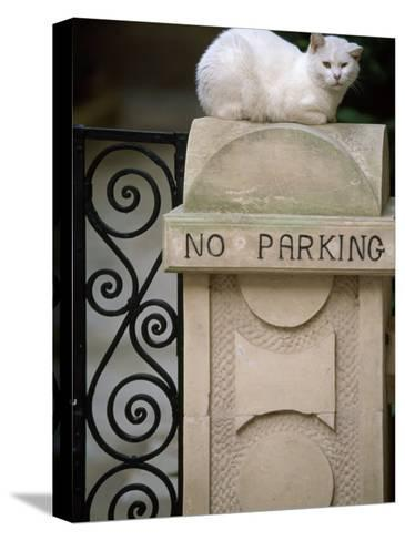 """White Cat Sits on a """"No Parking"""" Sign-Michael Melford-Stretched Canvas Print"""