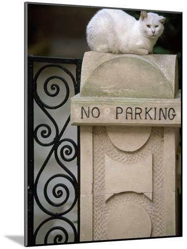 """White Cat Sits on a """"No Parking"""" Sign-Michael Melford-Mounted Photographic Print"""