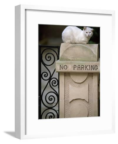 """White Cat Sits on a """"No Parking"""" Sign-Michael Melford-Framed Art Print"""