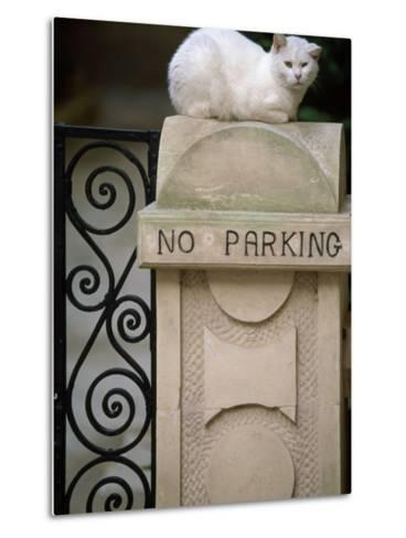 """White Cat Sits on a """"No Parking"""" Sign-Michael Melford-Metal Print"""