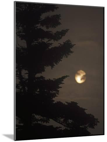 Setting Sun and a Silhouetted Spruce Tree in Fog-Raymond Gehman-Mounted Photographic Print
