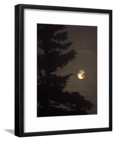 Setting Sun and a Silhouetted Spruce Tree in Fog-Raymond Gehman-Framed Art Print