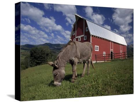Donkey Grazing Near a Large Red Barn-Ed George-Stretched Canvas Print