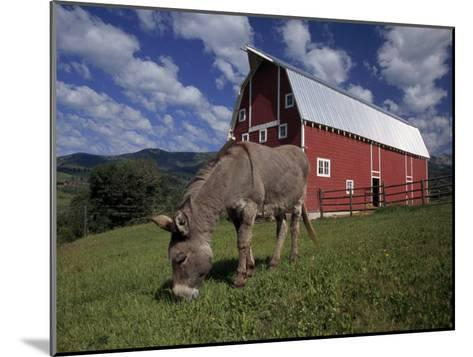 Donkey Grazing Near a Large Red Barn-Ed George-Mounted Photographic Print