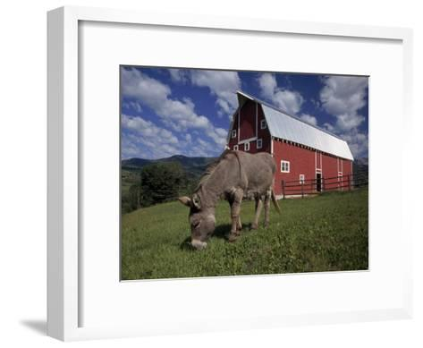 Donkey Grazing Near a Large Red Barn-Ed George-Framed Art Print