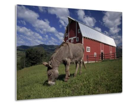 Donkey Grazing Near a Large Red Barn-Ed George-Metal Print