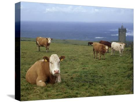 Cattle in a Field Near Restored 14th Century Donnagore Castle-xPacifica-Stretched Canvas Print