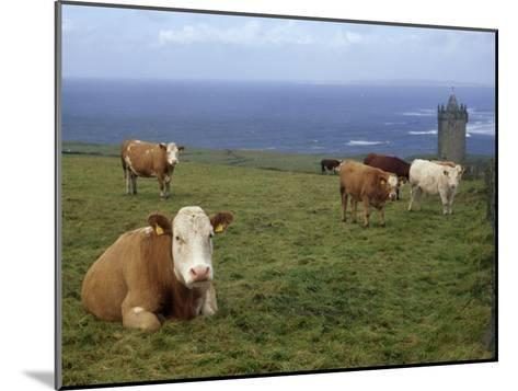 Cattle in a Field Near Restored 14th Century Donnagore Castle-xPacifica-Mounted Photographic Print