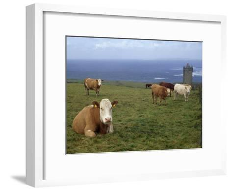 Cattle in a Field Near Restored 14th Century Donnagore Castle-xPacifica-Framed Art Print