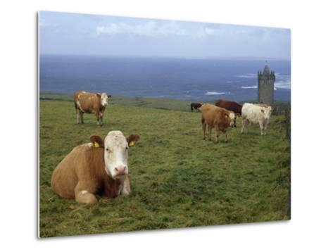 Cattle in a Field Near Restored 14th Century Donnagore Castle-xPacifica-Metal Print