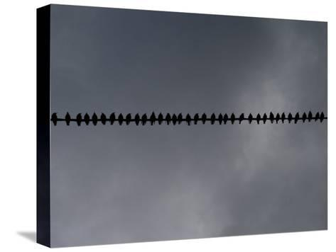 Birds on a Telephone Wire: Bird School-xPacifica-Stretched Canvas Print