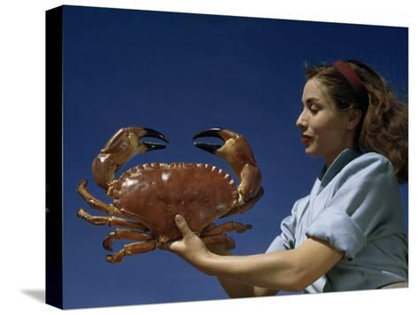Woman Holds a Crab Caught in the Bay of Biscay-Luis Marden-Stretched Canvas Print