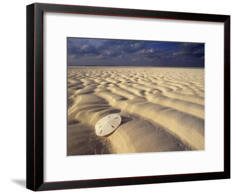 Sand Dollar Lies on a Sandy Beach-Michael Melford-Framed Art Print