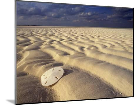 Sand Dollar Lies on a Sandy Beach-Michael Melford-Mounted Photographic Print