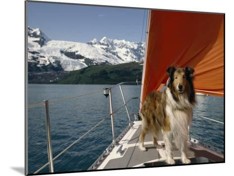 Collie Stands on the Bow of a Sailboat Near Snowy Mountains-Michael Melford-Mounted Photographic Print