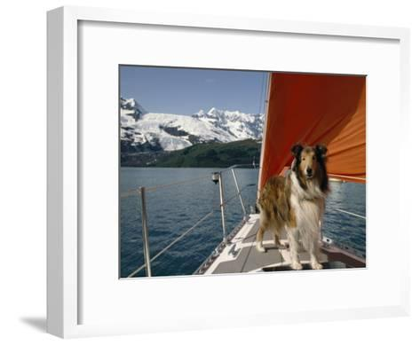 Collie Stands on the Bow of a Sailboat Near Snowy Mountains-Michael Melford-Framed Art Print