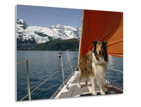 Collie Stands on the Bow of a Sailboat Near Snowy Mountains-Michael Melford-Metal Print