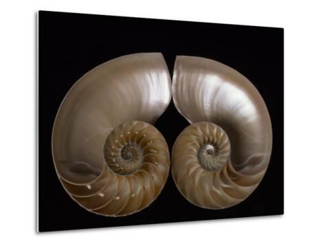 Nautilus Shell Cut in Half to Reveal Compartments-Michael Melford-Metal Print