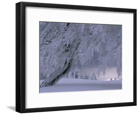 Snow-Blanketed Trees in a Fairy Tale Winter Landscape-Norbert Rosing-Framed Art Print