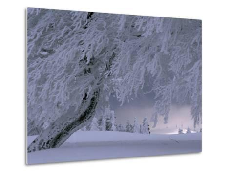 Snow-Blanketed Trees in a Fairy Tale Winter Landscape-Norbert Rosing-Metal Print