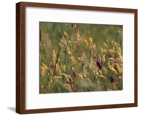Colorful Seed Heads on Swaying Grasses-Norbert Rosing-Framed Art Print