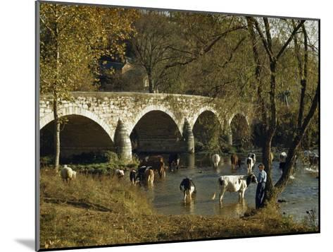 Boy Fishes in a River Near Wading Cows and Old Stone Bridge-Joseph Baylor Roberts-Mounted Photographic Print