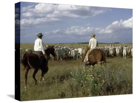 Cowboys Drive a Herd of Brahman Cattle across Texas Range-Howell Walker-Stretched Canvas Print