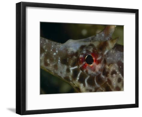 Close Up of a Seahorse Eye-George Grall-Framed Art Print