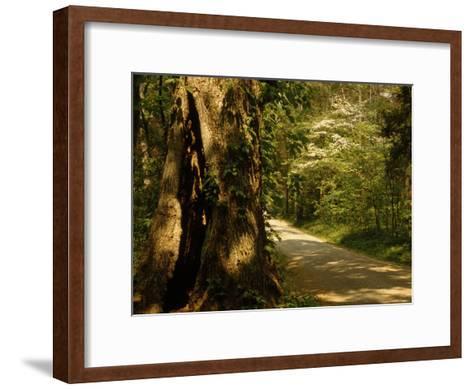 Shade-Dappled Dirt Road Through Lush Forest-Raymond Gehman-Framed Art Print