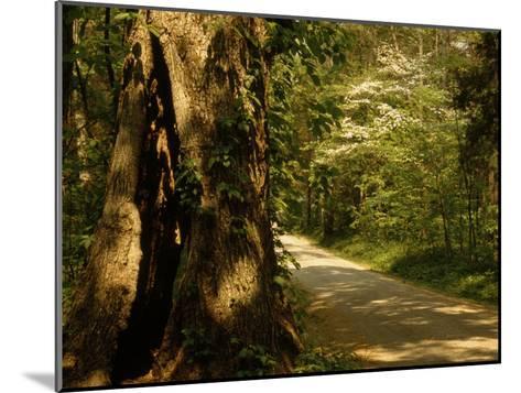 Shade-Dappled Dirt Road Through Lush Forest-Raymond Gehman-Mounted Photographic Print