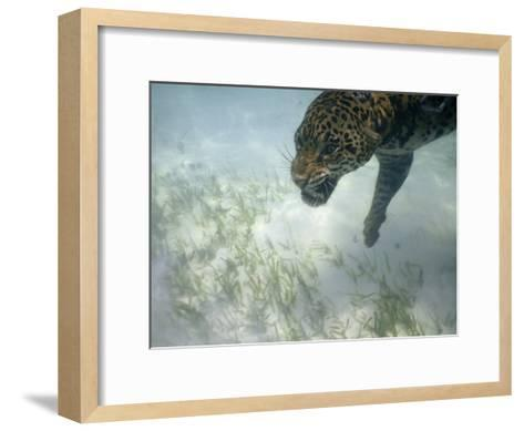 Jaguar Takes a Swim in the Clear Water Off the Shore of Cancun-Steve Winter-Framed Art Print