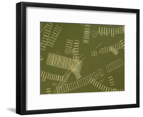 Freshwater Diatoms-Darlyne A^ Murawski-Framed Art Print